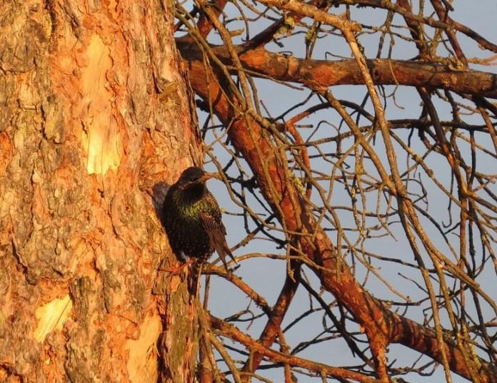 Похолодание нарушило планы птиц в Окском заповеднике