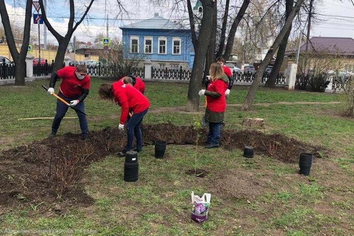 В Рязани посадили дерево, выращенное из легендарного сталинградского тополя