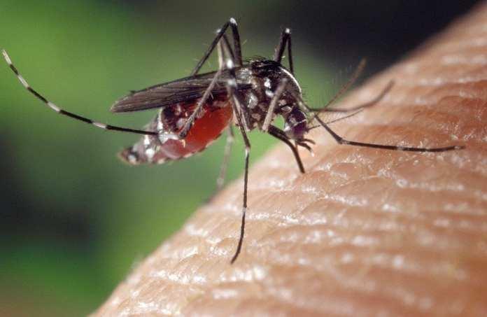 Специалисты объяснили снижение количества комаров в Рязани