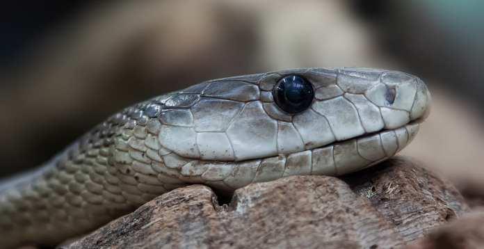 В Рязанской области активизировались змеи
