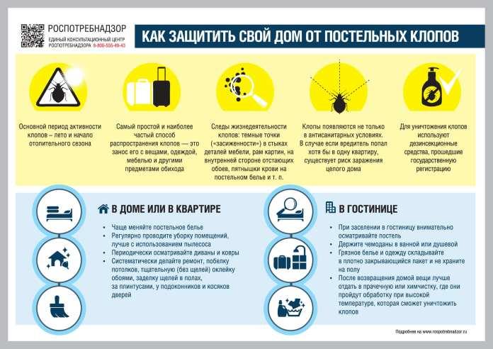 В России появились тропические постельные клопы
