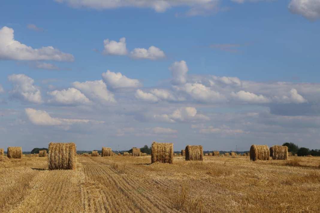Рязанские синоптики дали прогноз на новый урожай