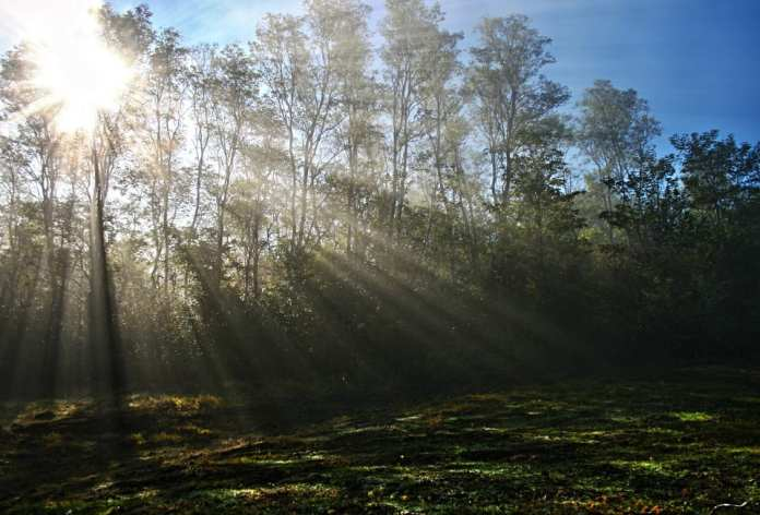 Во вторник в Рязани воздух прогреется до +25°С