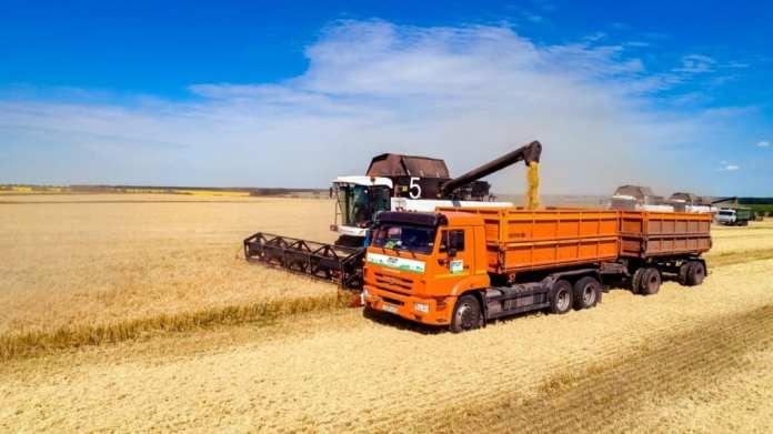 В Рязанской области в самом разгаре уборка пшеницы