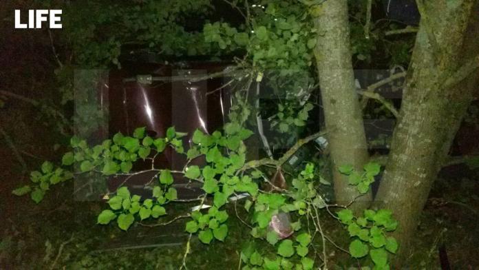 В Псковской области четыре человека погибли от столкновения машины с лосем