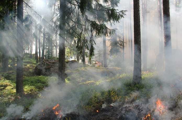 Лесные пожары в Ростовской области достигли жилых домов