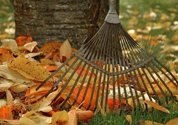 Какие работы проводят в саду и огороде в октябре