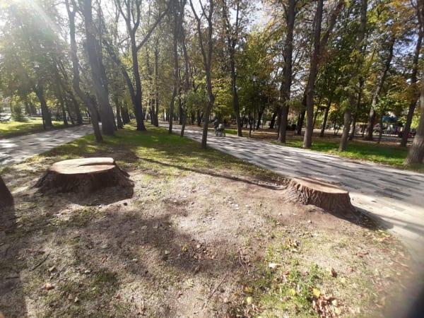 ОНФ просит администрацию Рязани проанализировать расходы на благоустройство Наташиного парка