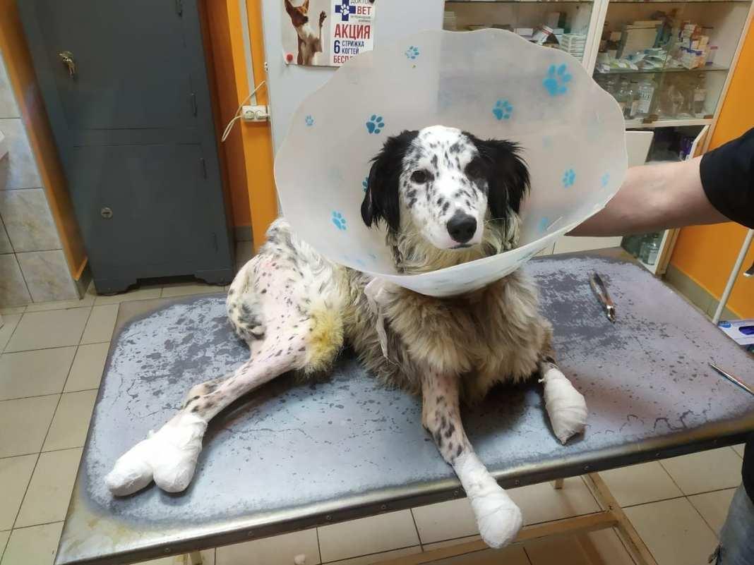 В Рязани спасают собаку, попавшую в жидкий азот