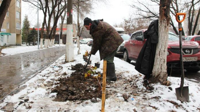 На Севастопольской аллее высадили, рябины, ивы и пузыреплодник