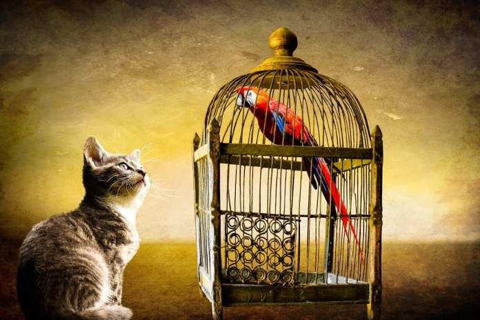 В Рязани ввели карантин из-за заражения хламидиозом птиц