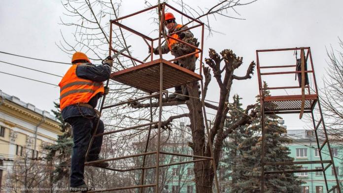 На улице Циолковского в Рязани начали обрезать липы