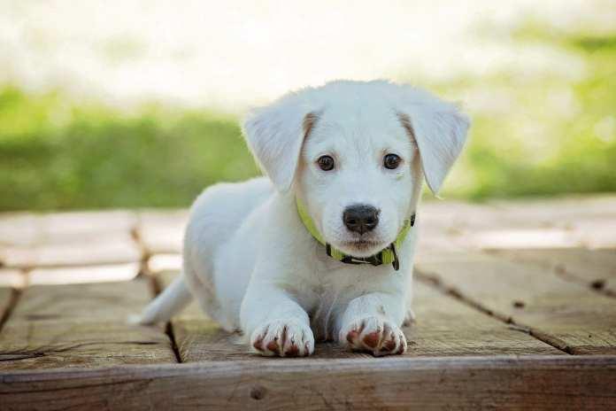Астраханский муниципальный приют пристроил в дома уже 58 бездомных собак