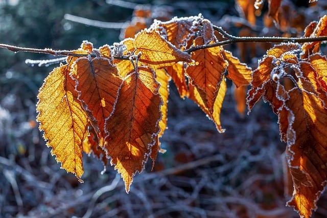 Ночью в Рязанской области похолодает до -14°С