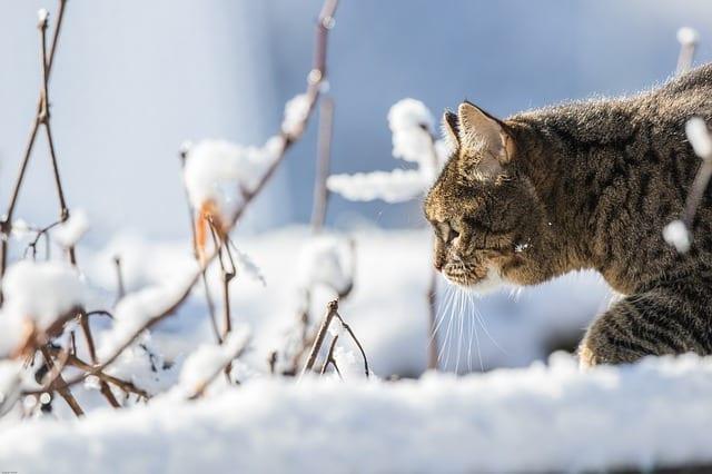 В Рязанской области ожидается до -10 градусов