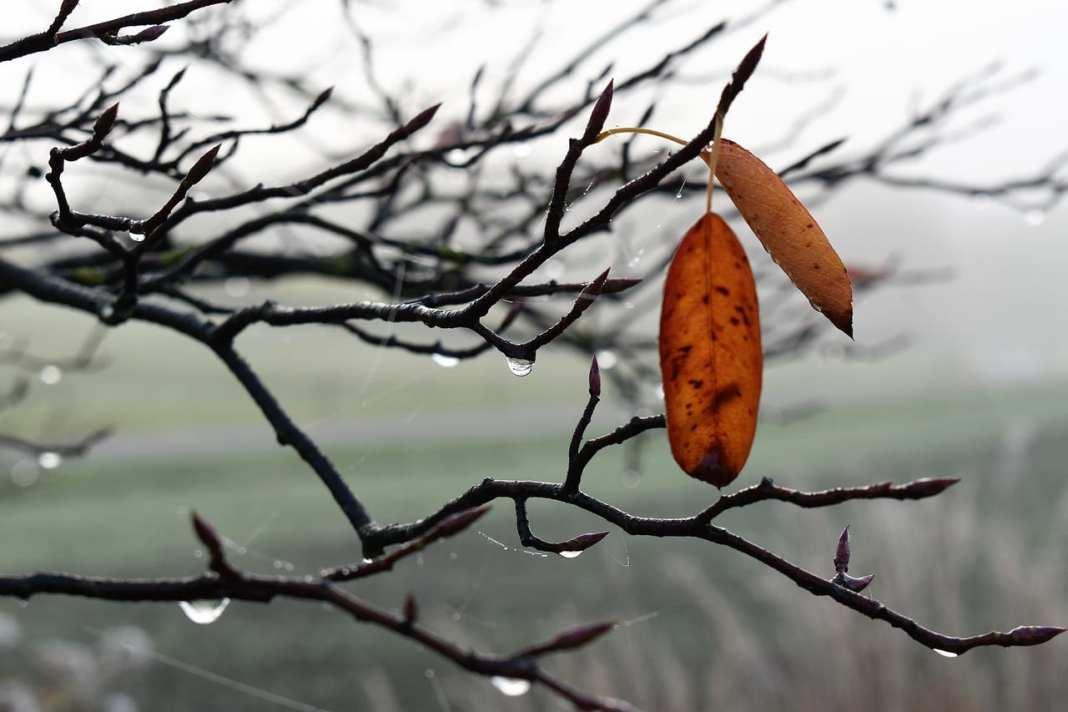 В Рязани потеплеет до плюс 5 градусов