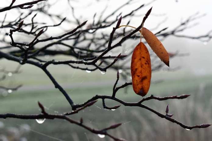 Плюсовая температура ожидается в Смоленской области 21 февраля