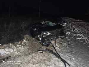 В Кадомском районе водитель сбил лося