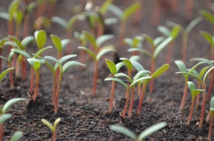 Что можно посадить на рассаду в марте