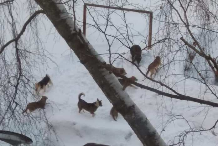 Рязанка пожаловалась на стаю бездомных агрессивных собак