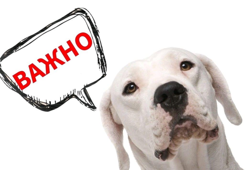 Рязанская служба по контролю за безнадзорными животными сообщила об изменениях в работе