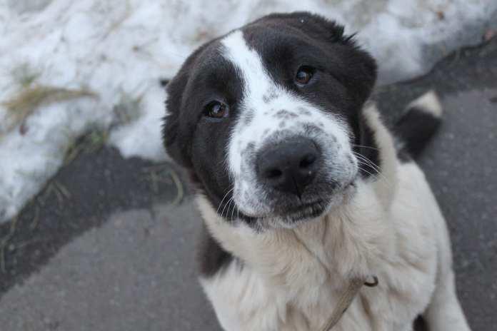 Приют для бездомных собак в Сасове приостановил работу из-за погоды