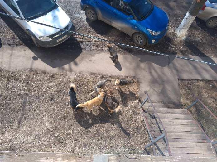 В Рыбном собаки нападают на прохожих – соцсети