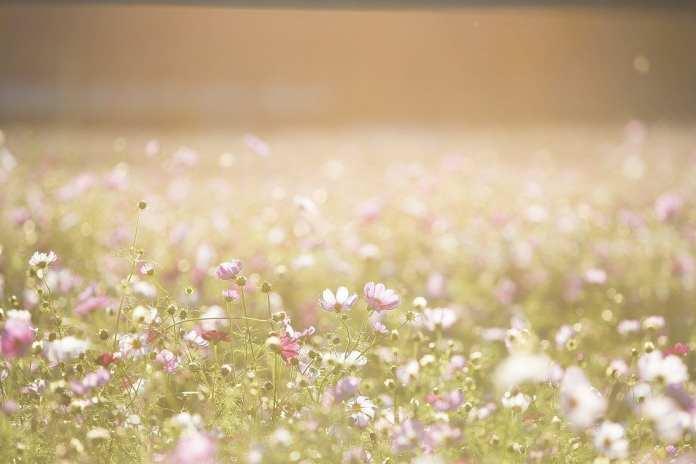 После майских праздников в Рязани резко потеплеет