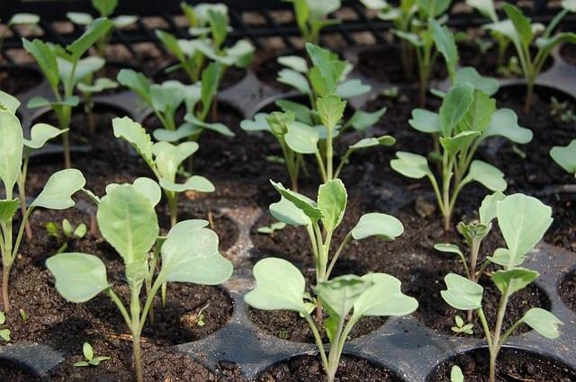 Народные приметы 18 мая: что нельзя и что можно делать в день Арины-капустницы
