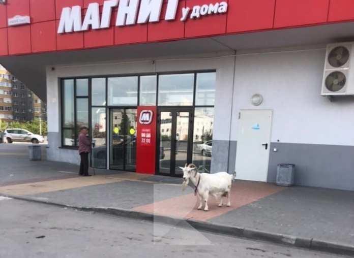 У «Магнита» в Рязани сфотографировали козу
