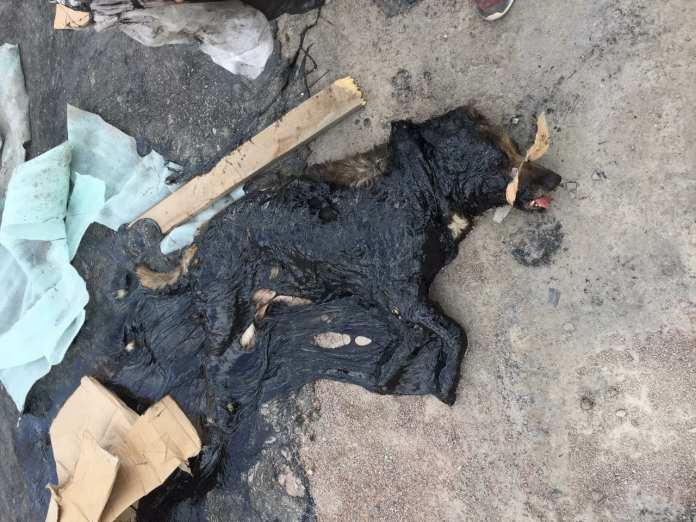В Рязани спасают собаку, попавшую в битум