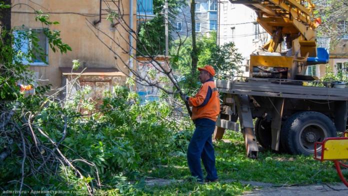 В Рязани проводится валка аварийных деревьев