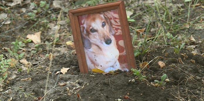 В Рязани разрастаются незаконные кладбища домашних животных