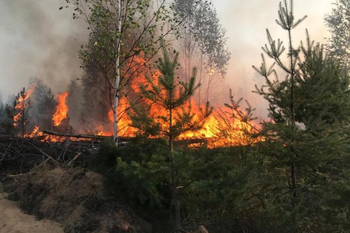 На территории Солотчинского лесничества произошёл лесной пожар