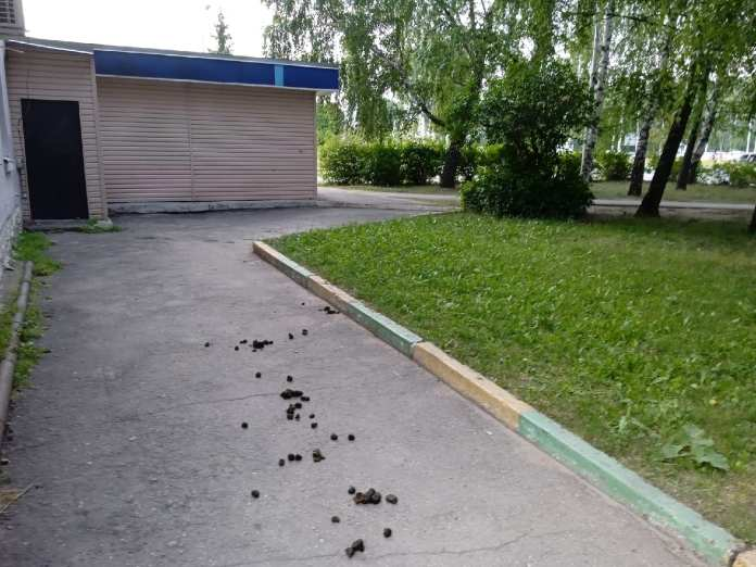 Рязанцы возмутились лошадиными фекалиями на улицах