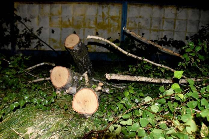 В Новомичуринске из-за ливня затопило улицы и повалило деревья