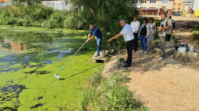 Власти проверят пруд в Рязани, где погибли утки и рыба