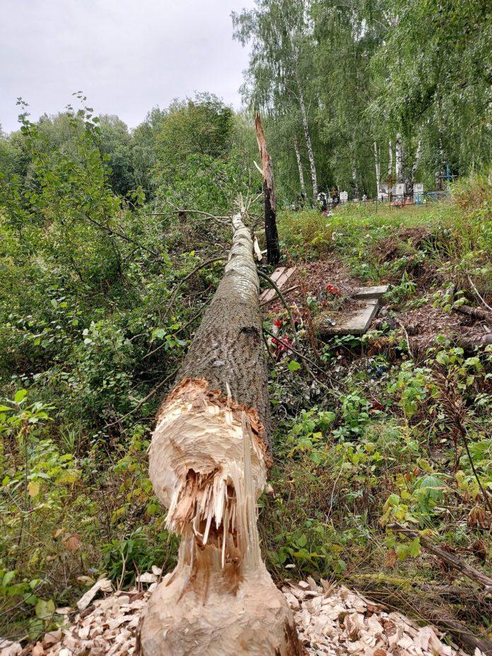 В Рыбновском районе упавшие деревья повредили кладбище