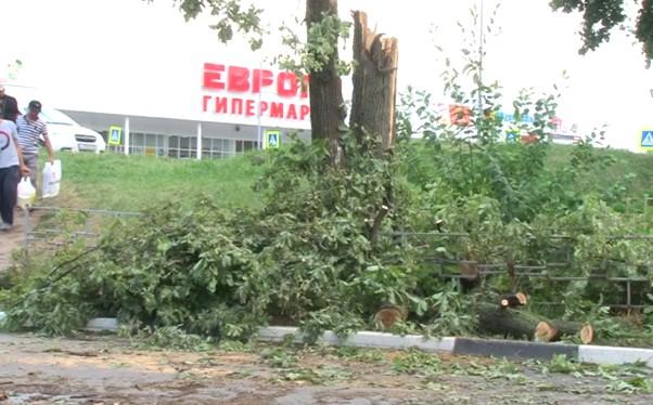 Сильный ветер повредил деревья в Дашково-Песочне