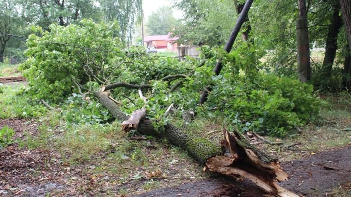 В двух районах Рязанской области ураганный ветер повалил деревья и оборвал провода
