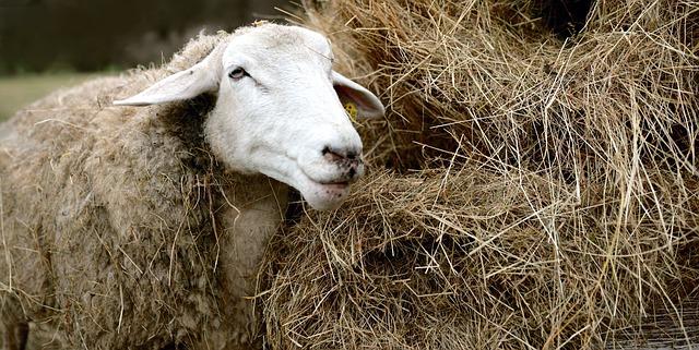 Народные приметы 15 сентября: что нельзя и что нужно делать в день Мамонтия-Овчарника