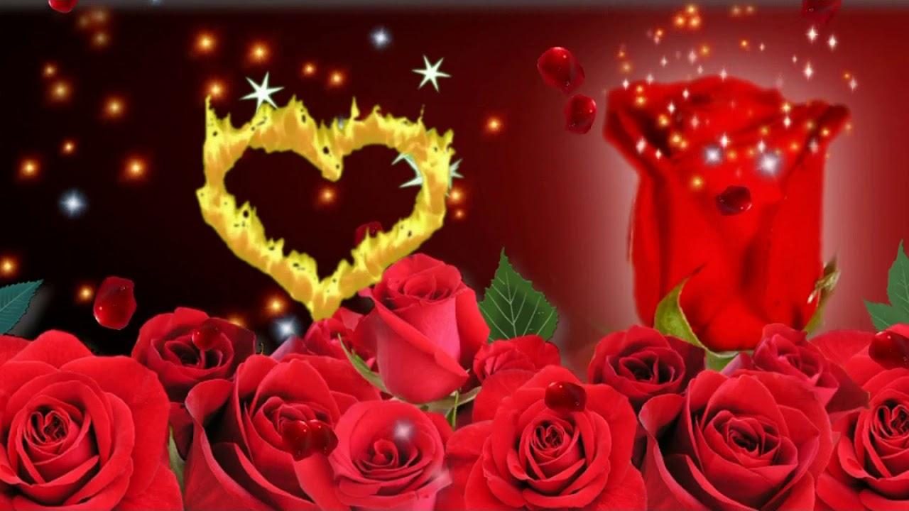 صور ورود حمراء متحركه الورود الحمراء فى صورة متحركه تشبه