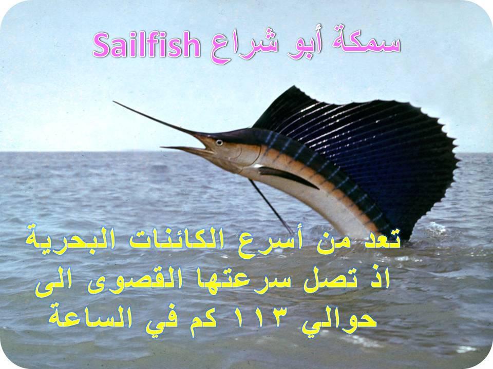 ما هو اسرع المخلوقات البحريه تعرف على حل اللغز ومعرفه الاجابه