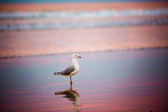 selective focus photography of ring billed gull on shore