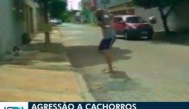Cão rasteja de dor no asfalto após ser ferido por rodo arremessado por homem em Goiânia