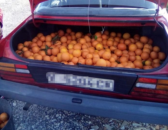 robo naranjas