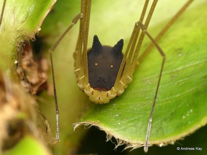 Imagen de una araña con cara de perro