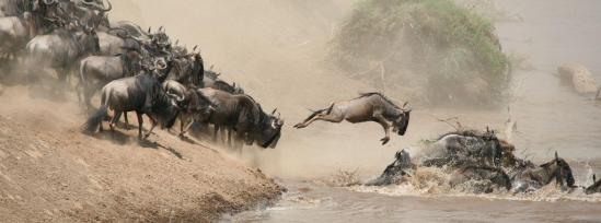 109-kenya-great-migration
