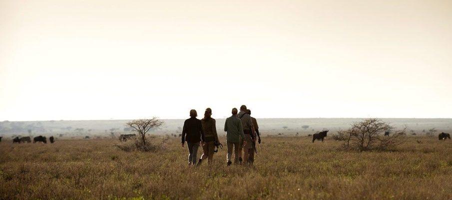 Bush Walks Serengeti