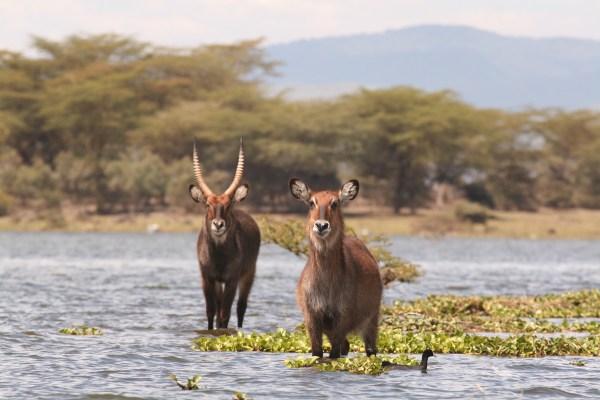 Lake-Nakuru-Lake-Naivasha-